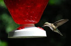 Hummingbird. A hummingbird at a feeder stock photo