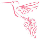 Hummingbird. Simple pink illustrated hummingbird flying Royalty Free Stock Image