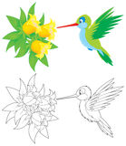 Hummingbird. Humming-bird flying over tropical flowers, color and black-and-white outline illustrations on a white background Stock Photos