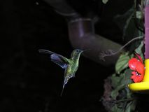 Hummingbird. In flight - repair the flaw in his wing - maybe he was attacked? I don?t know stock images