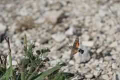 hummingbird Imagenes de archivo