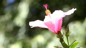 hummingbird stock video
