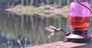 hummingbird Imagen de archivo