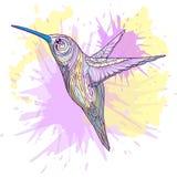 Hummingbird with abstract ornament vector Stock Photos