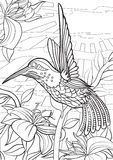 Hummingbird stock illustration