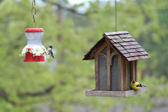 Hummingbird and American Goldfinch At Birdfeeders Royalty Free Stock Photography
