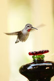 Hummingbird approaching a bird feeder Royalty Free Stock Photography
