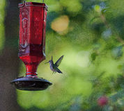 Hummingbird Approaching a Feeder Royalty Free Stock Photo