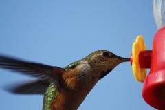 Free Hummingbird At Feeder Royalty Free Stock Image - 10295816