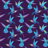 Hummingbird Background Royalty Free Stock Photos