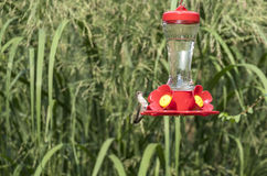 Hummingbird at a Backyard Feeder #5 Royalty Free Stock Images