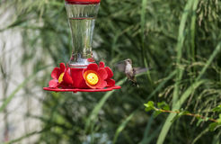 Hummingbird at a Backyard Feeder #2 Stock Images