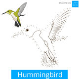 Hummingbird bird learn to draw vector Stock Images