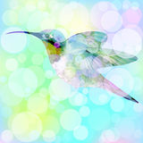 Hummingbird with bokeh effect. Vector. 2 Stock Photography