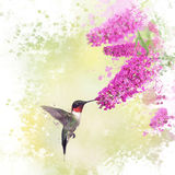 Hummingbird and Butterfly bush watercolor Stock Images
