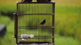 Exotic bird in a cage. Hummingbird in a cage outside against green foliage stock video