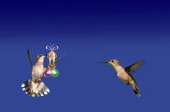 Hummingbird carrying ball ornaments Royalty Free Stock Photo