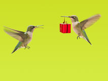 Hummingbird carrying a gift to another Royalty Free Stock Photo