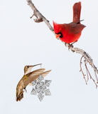 Hummingbird carrying snowflake Christmas ornament Stock Photography