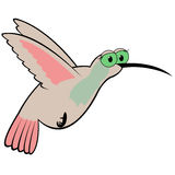 Hummingbird Cartoon Vector Illustration Royalty Free Stock Images