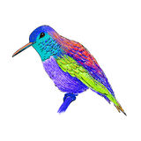 Hummingbird with colorful glossy plumage. Modern pop art style. Royalty Free Stock Photos