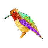 Hummingbird with colorful glossy plumage. Modern pop art style. Stock Image