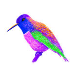 Hummingbird with colorful glossy plumage. Modern pop art style. Colorful bird, white background. Vector illustration of colibri for greeting card,invitation Stock Image