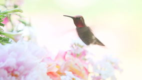 Pink summer blooms with hummingbird