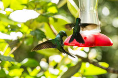 Hummingbird drinking from a container Stock Photos