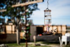 Hummingbird drinking water at Bottle Tree Ranch. Mother ROAD ROUTE 66 on a sunny day. Hummingbird drinking water at Bottle Tree Ranch Royalty Free Stock Photography
