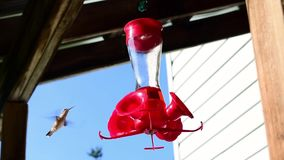 Hummingbird Drinks Under Porch Roof stock video footage