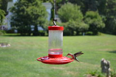 Hummingbird eating Stock Photo
