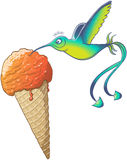 Hummingbird eating ice cream cone stock images