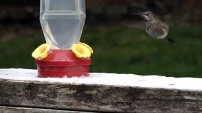 Hummingbird eating out of feeder on snowy day