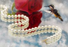 Hummingbird and Elegant pearls Stock Photo