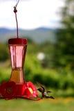 Hummingbird at feeder. Humming bird drinking from an outdoor feeder Royalty Free Stock Photo