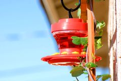 Hummingbird feeder Royalty Free Stock Image