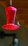Hummingbird on Feeder Stock Images