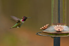 Hummingbird and feeder. Stock Photo