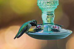 Hummingbird and feeder. Royalty Free Stock Photography