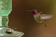Hummingbird and feeder. Royalty Free Stock Photos