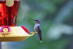 Hummingbird with feeder. Side view of Hummingbird perched on colorful garden bird feeder Royalty Free Stock Photo