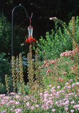 Hummingbird Feeder Stock Photo