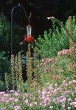 Hummingbird Feeder Stock Photo