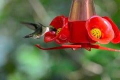 A hummingbird at the feeder stock photo