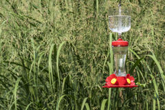 Hummingbird Feeder in a Backyard Garden #3 Stock Image