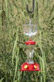 Hummingbird Feeder in a Backyard Garden Stock Photography