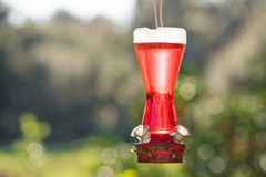 Hummingbird Feeder with bees Royalty Free Stock Images