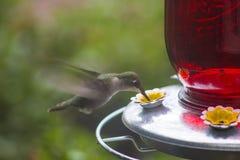 Hummingbird. At feeder enjoying nectar with green foliage background stock photos