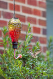 Hummingbird feeder. Female Ruby throated Hummingbird flying at feeder, drinking sweet nectar from trumpet opening Royalty Free Stock Image